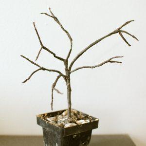 project creepy tree